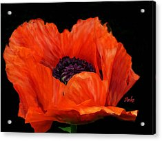 Another Red Poppy Acrylic Print by Anke Wheeler