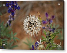Another White Flower Acrylic Print