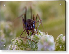 Ant Acrylic Print by Andre Goncalves