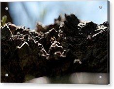 Ant Acrylic Print