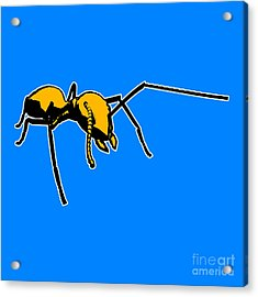 Ant Graphic  Acrylic Print by Pixel  Chimp