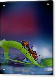 Ant In A Colorful World Acrylic Print by Bob Rasulev