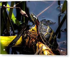 Ant Meets Turtle Acrylic Print by Bob Orsillo