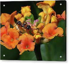 Acrylic Print featuring the photograph Ant On Plant  by Richard Rizzo