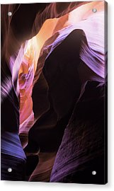 Antelope Abstract Acrylic Print by Gray Mitchell