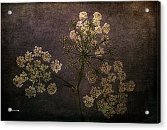 Acrylic Print featuring the photograph Anthriscus Sylvestris by Randi Grace Nilsberg