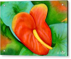 Anthurium Flowers #228 Acrylic Print by Donald k Hall