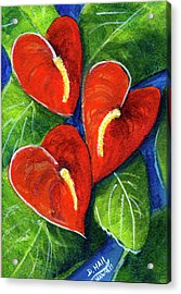 Anthurium Flowers #272 Acrylic Print by Donald k Hall