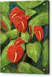 Anthurium Flowers #231 Acrylic Print by Donald k Hall