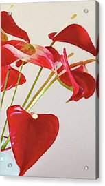 Anthurium Fragments In Red Acrylic Print