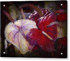 Acrylic Print featuring the photograph Anthuriums For My Valentine by Lori Seaman
