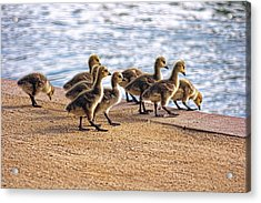 Anticapation  Acrylic Print by Tammy Espino