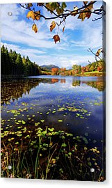 Acrylic Print featuring the photograph Anticipation by Chad Dutson