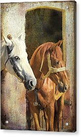 Anticipation Acrylic Print by Colleen Taylor