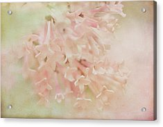 Acrylic Print featuring the photograph Anticipation  by Connie Handscomb