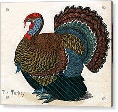 Antique Print Of A Turkey, 1859  Acrylic Print by American School