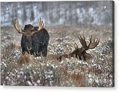 Acrylic Print featuring the photograph Antlers In The Brush by Adam Jewell