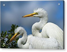 Anxiously Waiting Acrylic Print by Christopher Holmes