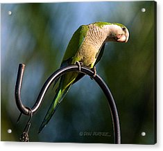 Any Peanuts In There Acrylic Print by Don Durfee