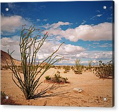 Anza Borrego Desert Acrylic Print