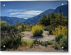 Acrylic Print featuring the photograph Anza-borrego Desert State Park Desert Flowers by Randall Nyhof