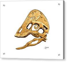 Anzu Wyliei Skull Acrylic Print