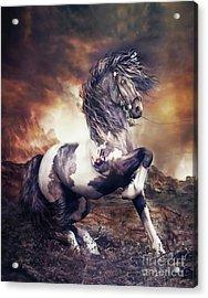 Apache War Horse Acrylic Print