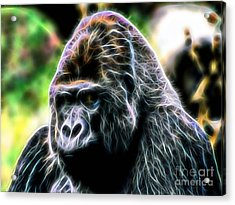 Ape Collection Acrylic Print