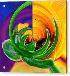 Aphid Hidden In Flower Acrylic Print
