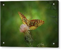 Acrylic Print featuring the photograph Aphrodite Fritillary Butterfly by Sandy Keeton