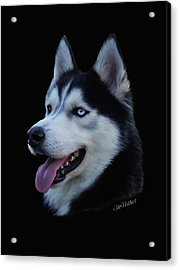 Apollo Acrylic Print by Julie L Hoddinott