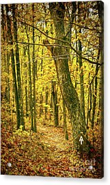 Acrylic Print featuring the photograph Appalachian Trail In The Blue Ridge In Autumn Ap by Dan Carmichael