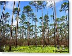 Appalachicola National Forest Acrylic Print