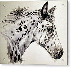 Appaloosa Acrylic Print by Keran Sunaski Gilmore