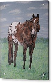 Acrylic Print featuring the drawing Appaloosa by Melita Safran