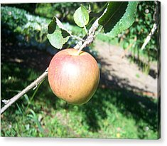 Apple 104 Acrylic Print by Ken Day