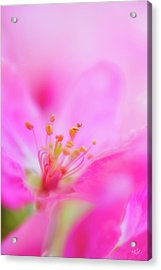 Apple Blossom 1 Acrylic Print by Leland D Howard