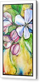 Apple Blossom Acrylic Print by Clare Catling