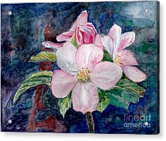 Apple Blossom - Painting Acrylic Print