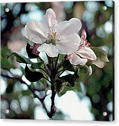 Apple Blossom Time Acrylic Print by RC deWinter