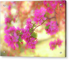 Apple Blossoms B Acrylic Print by Leland D Howard