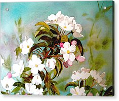 Apple Blossoms Acrylic Print by Faye Ziegler
