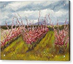 Apple Hill Springtime Acrylic Print by Brenda Williams