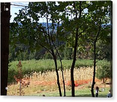 Apple Hill Trees Acrylic Print by Dawn Marie Black