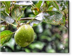 Apple In Rain Acrylic Print by Isabella F Abbie Shores FRSA