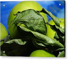 Apple Leaves Acrylic Print by Michael Canning