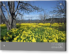 Acrylic Print featuring the photograph Apple Orchard In January by Stan and Anne Foster