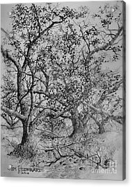 Apple Orchard Acrylic Print by Jim Hubbard