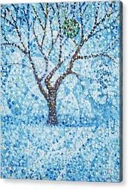 Apple Orchard / Winter Acrylic Print by Jim Rehlin