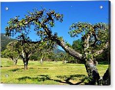 Apple Orchards Of Oak Glen Acrylic Print by Glenn McCarthy
